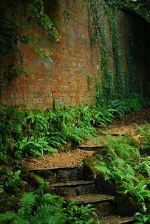 Fern garden, Kingston Lacy | by Forest Pines