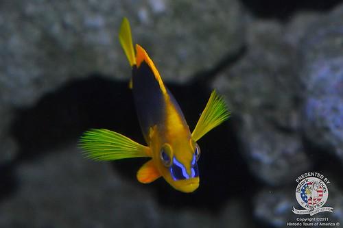 Untitled   by keywest aquarium