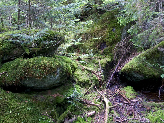 2:51:31 (80%): vermont hiking greenmountains mthunger whiterocktrail mtwhiterock