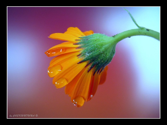 THE BEST FLOWER # 07