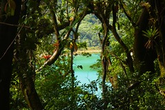View of Botos Lagoon, Poás Volcano National Park / Vista de la Laguna Botos, Parque Naciónal Volcán Poás