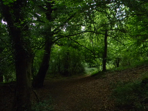 In the woods Amberley to Pulborough