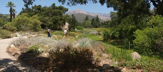K7101105_3 110710 Santa Barbara Botanic Garden prairie field ICE rm stitch98