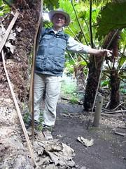 zo, 11/10/2009 - 20:09 - 15_ In het Nalga _rabarber_ bos op plateau El Yunque