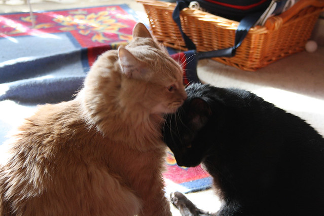 A Tender Moment Between Brother's ~ Champaz and Blacky....