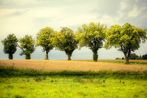 trees summer sky 6 green nature grass landscape countryside skåne europe pattern fav50 sweden meadow fav20 sverige scandinavia six fav30 scania zweden fav10 svedala fav40 fav60 ef70200mmf4lusm canoneos5dmarkii