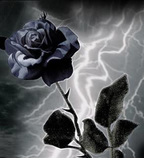 Bunga Mawar Hitam Mira Kurniasari Flickr