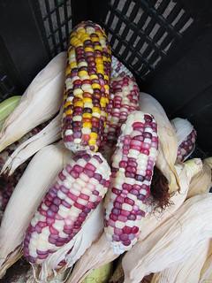 Corn | by goosmurf