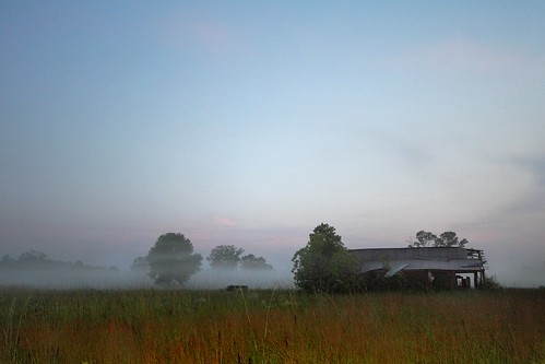 morning trees sky abandoned fog rural landscape louisiana shed shack thesouth canonefs1022mmf3545usm 22mm mrgreenjeans gaylon lowlyingfog gaylonkeeling