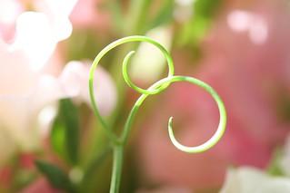 sweet pea   by penelope waits