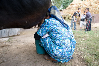 Galima Muhametarimovna collects five to six liters per day of milk | by UN Women Gallery