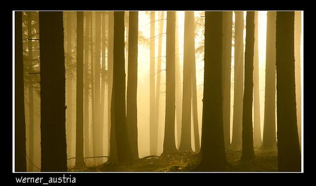 10-11 Misty morning_02958