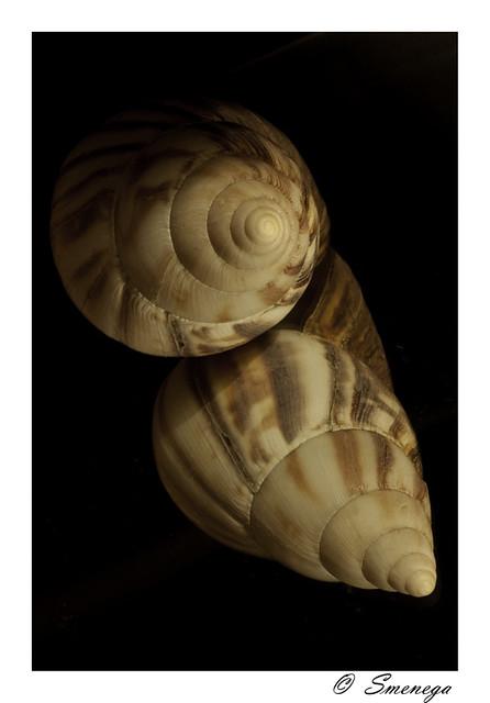 shell 800.jpg
