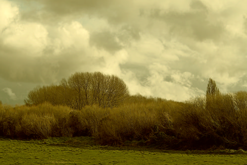 trees newzealand sky cloud monochrome grass clouds rural landscape countryside poplar outdoor country nelson olympus richmond willow waimea southisland serene pastoral em5 microfourthirds duncancunningham duncanmc42
