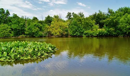 lake green oklahoma water paul zoo pond g lillies tulsa newton
