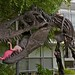 Mon, 2011-07-11 12:28 - Stan, Google's T-Rex after an April 1 encounter with a flock of plastic flamingos.