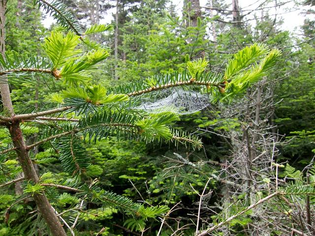 1:13:52 (56%): hiking spiderweb newhampshire whitemountains mtmoosilauke bentontrail