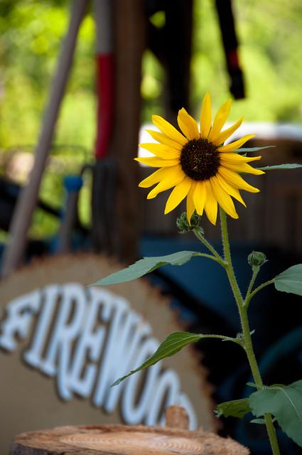 Summer's Sun