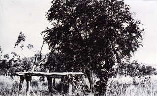 1921 The Quiet Stockman's Grave between Ivanhoe and Argyle - KHS-2011-15-15-P2-D | by Kununurra Historical Society