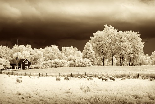 clouds ir sheep infrared skövde broddetorp