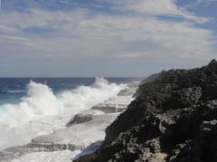 zo, 03/10/2010 - 04:26 - 64_ Omhoog gewerkt koraalriffen van Niue