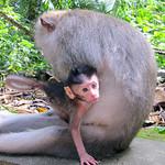 Monkey Forest in Bali (Ubud), Indonesia