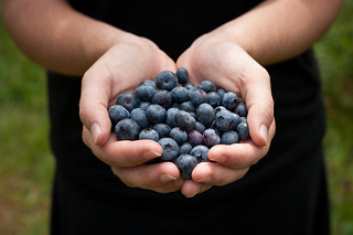 Freshly-Picked Blueberries | by goingslowly