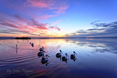 sunset pelicans reflections nsw lakesentrance johnfinnan