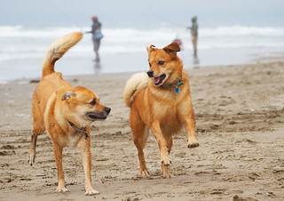 Romping on the Beach | by tehgipster