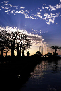 Sunset, Baobab trees, and silhouette, on the jetty, James Island, River Gambia,West Africa