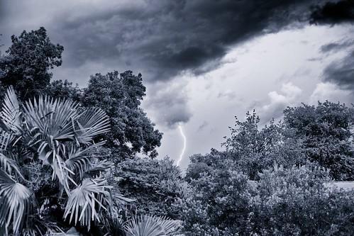 blackandwhite clouds contrast aperture louisiana nimbus flash palmtrees batonrouge bolt strike thunderstorm lightning canonef35mmf14lusm canon5dmkii niksilverefexpro aeolightningstrikeii