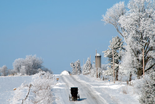 winter white snow cold tree ice fog landscape frozen frost hoarfrost farm country silo amish icy buggy frozenfog horsebuggy kalona