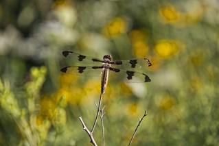 Dragonfly at Retzer Nature Center Waukesha Wisconsin [Explore] | by 2sheldn