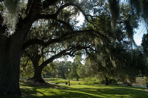 usa alberi flora 30luglio2010