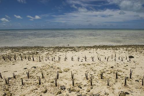 travel island nikon pacific mangrove unitednations environment climatechange kiribati tides unphoto atoll tarawa bankimoon worldphotography