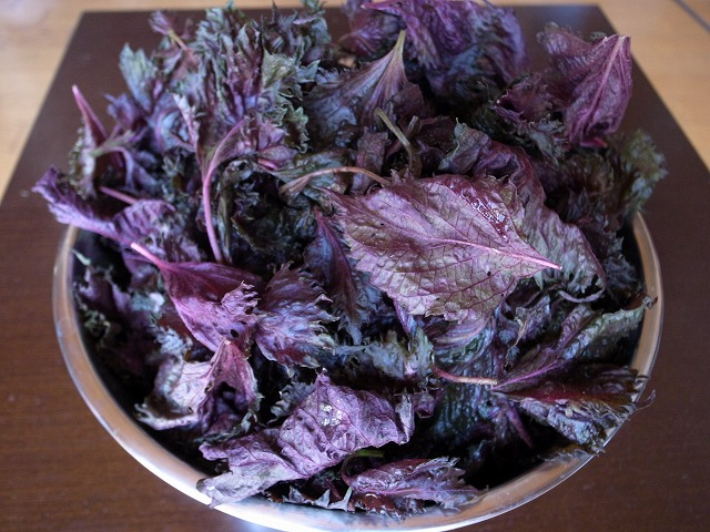 <p>a)シソの葉を茎からはずしきれいに洗います。</p>