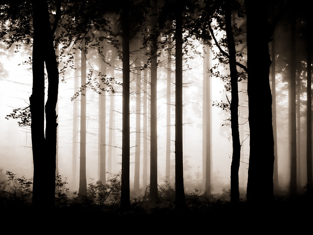 A Forest_9287-2