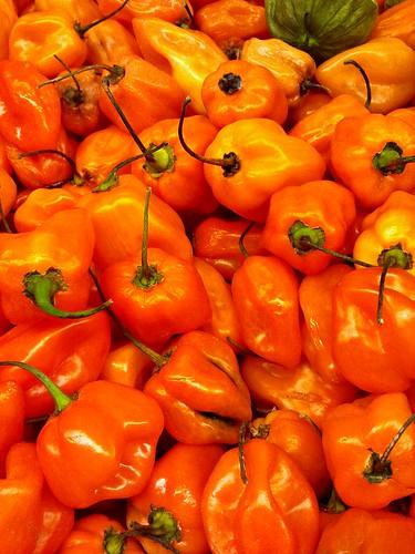 Habanero Peppers - Burn Baby Burn!   by KurtClark
