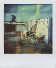 Las ruidos perros en silencio by Rhiannon Adam