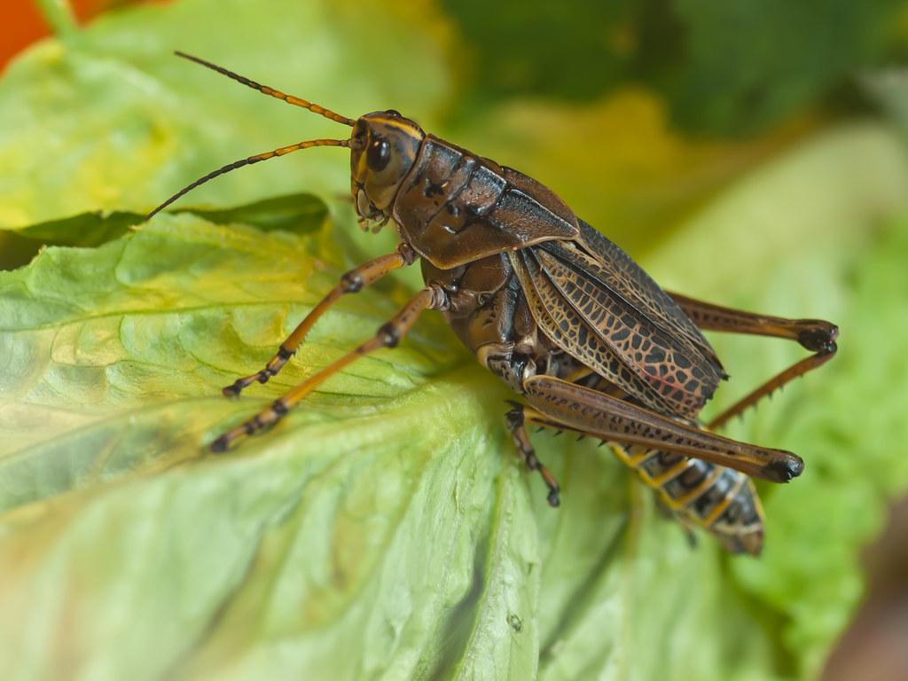 Cricket at London Zoo