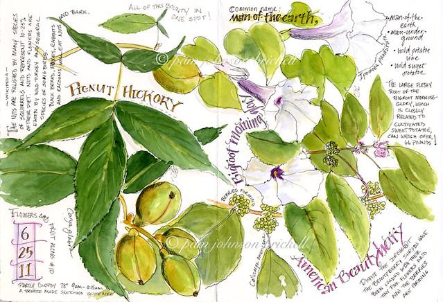 Fruit, Flower & Berry Update
