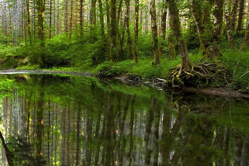 Beside Still Waters | by Ian Sane