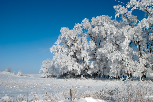 blue winter white snow cold tree ice fog fence landscape frozen frost hoarfrost country icy frozenfog kalona