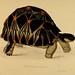 Tortoises, terrapins, and turtles