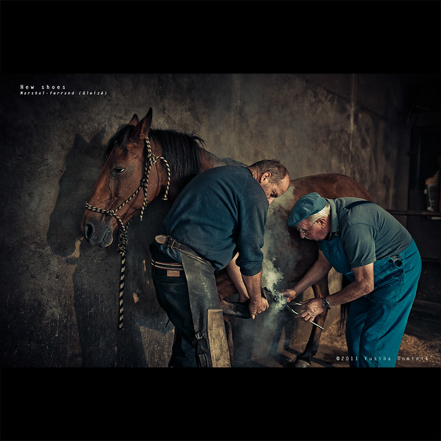 New shoes | Farrier (France)