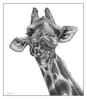 Fine Art Pencil Drawings