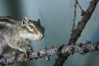 squirrely smirk | by istolethetv
