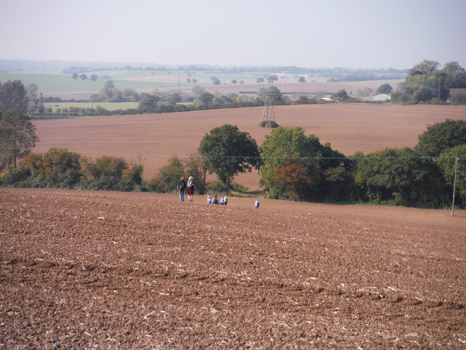 Walkers descending massive field SWC Walk 159 South Woodham Ferrers to North Fambridge