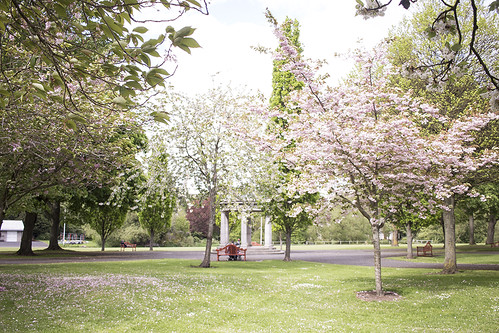 Best Places to see the Cherry Blossom Trees in Dublin | by The Art of Exploring