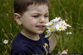 smelling the daisies - MG 5181.JPG | by sean dreilinger